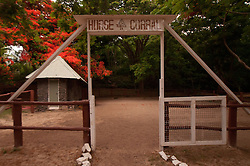 "Flamboyant ""Christmas"" Tree (Delonix regia) Over Horse Corral, Turtle Island, Yasawa Islands, Fiji"