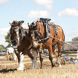 British National Horse Ploughing