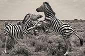 05. Animals & Nature