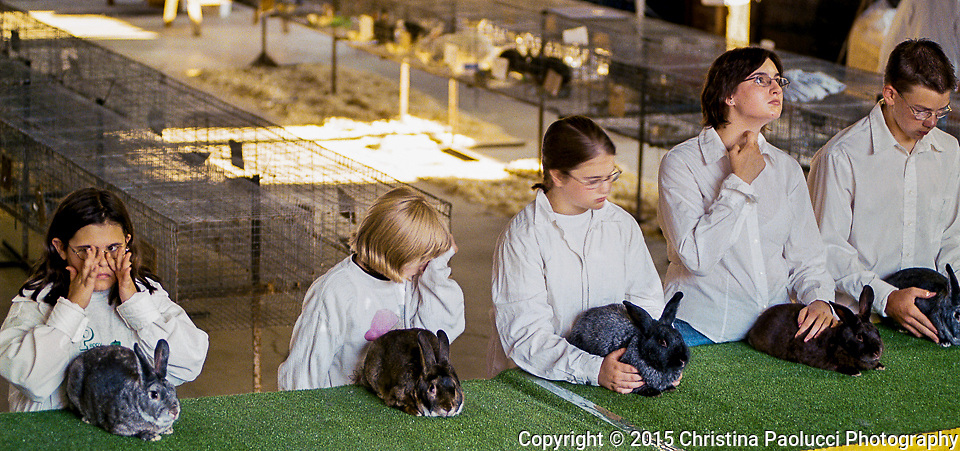 4-H members wait for the judges results through the heat and dust during the rabbit show on Wednesday.(Rochester Post-Bulletin, Christina Paolucci)