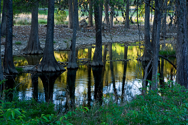 Stock photo of Cypress trees along the shallow water of the Frio River in the Texas Hill Country