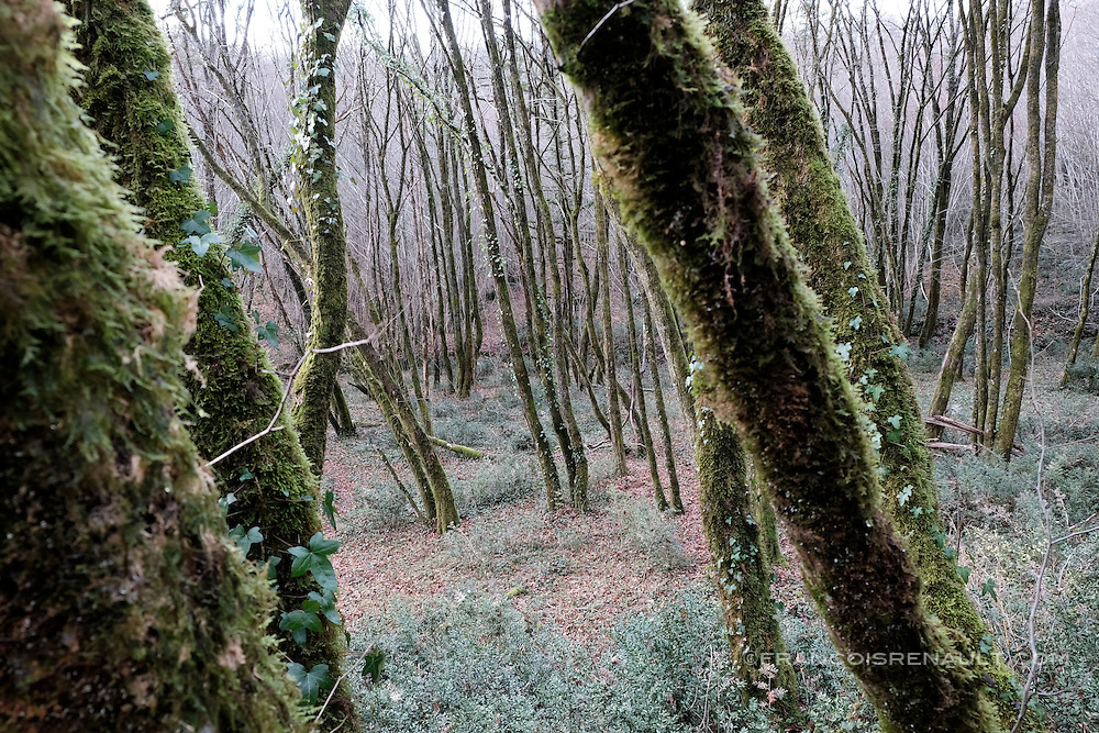 Paysage de Dordogne en hiver, France.