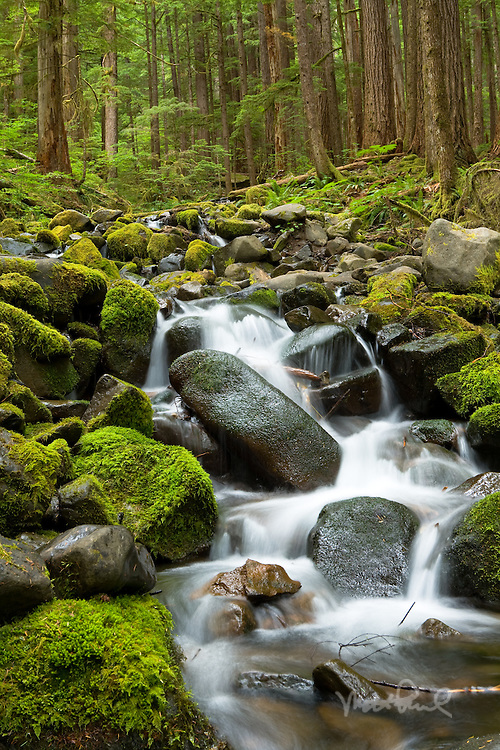 Creek on Sol Duc Trail one of hundreds of waterfalls found in the Pacific Northwest.