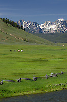 Horses and cattle on ranch in Stanley Basin, Sawtooth Mountains Idaho