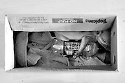 A weak piglet is kept warm by a bottle of water in a box inside the house.