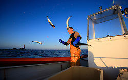 UK ENGLAND CORNWALL SENNEN COVE 11JUN08 - Handline fisherman Will Treneer (19) of Newlyn lands a string of Mackerel off the coast of south-west Cornwall on his boat, the Cornish Rose.<br />