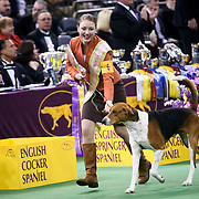 February 16, 2016 - New York, NY : Sophia Rogers, (NJ) with her American Foxhound, wins the Junior Showmanship category in the 140th Annual Westminster Kennel Club Dog Show at Madison Square Garden in Manhattan on Tuesday evening, February 16, 2016. CREDIT: Karsten Moran for The New York Times
