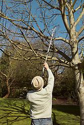 Rear View of Gardener Using Tree Pruning Tool