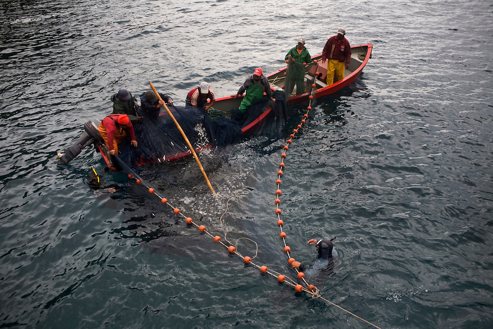 Traditional tuna fishing in the sea of the Azores, in the Atlantic ocean, Portugal.Fishing bate for the tuna.