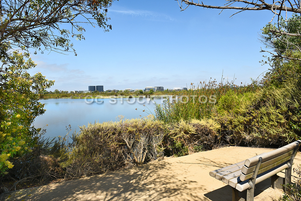 San Joaquin Marsh Pond  with Observation Bench