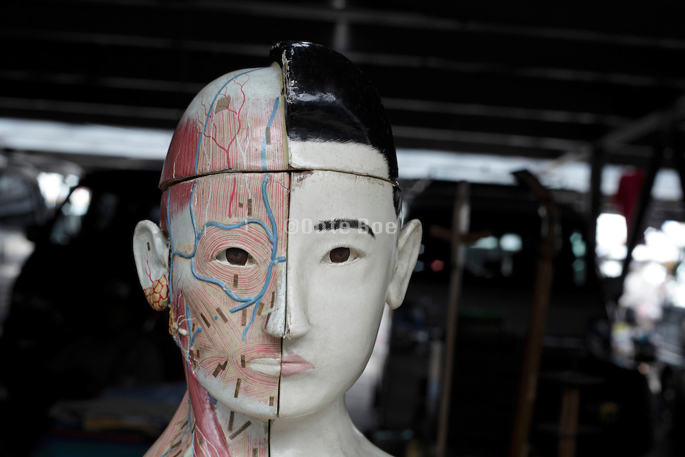anatomy doll
