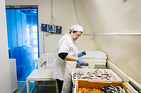 """PISCIOTTA, ITALY - 22 APRIL 2018: Donatella Marino, owner of """"Alici di Menaica"""", salts the Menaica anchovies in her processing workshop in Pisciotta, Italy, on April 22nd 2018.<br /> <br /> Former restaurant owners Donatella Marino and her husband Vittorio Rimbaldo have spent the recent years preparing and selling salted anchovies, called alici di menaica, to a growing market thanks to a boost in visibility from the non-profit Slow Food.  The ancient Menaica technique is named after the nets they use brought by the Greeks wherever they settled in the Mediterranean. Their process epitomizes the concept of slow food, and involves a nightly excursion with the special, loose nets that are built to catch only the larger swimmers. The fresh, red anchovies are immediately cleaned and brined seaside, then placed in terracotta pots in between layers of salt, to rest for three months before they're aged to perfection.While modern law requires them to use PVC containers for preserving, the government recently granted them permission to use up to 10 chestnut wood barrels for salting in the traditional manner. The barrels are """"washed"""" in the sea for 2-3 days before they're packed with anchovies and sea salt and set aside to cure for 90 days. The alici are then sold in round terracotta containers, evoking the traditional vessels that families once used to preserve their personal supply.<br /> <br /> Unlike conventional nets with holes of about one centimeter, the menaica, with holes of about one and half centimeters, lets smaller anchovies easily swim through. The point may be to concentrate on bigger specimens, but the net also prevents overfishing."""