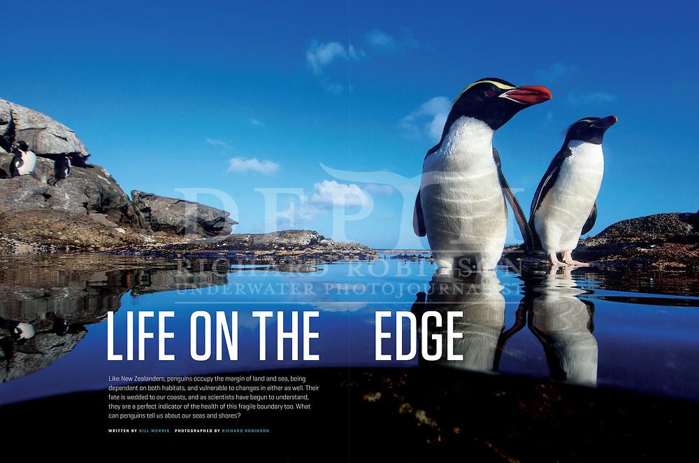 NEW ZEALAND GEOGRAPHIC ISSUE 143 JANUARY- FEBUARY 2017.<br /> Life on the Edge: What Penguins Are Telling Us About Our Seas.<br /> New Zealand Geographic &copy; 2017<br /> Photograph Richard Robinson &copy; 2017