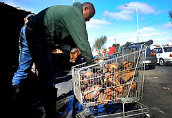 Cape Town-180829 Street vendor offloading Smiley Sheep head in Nyanga before cleaning them  Pictures Ayanda Ndamane/African/news/agency ANA