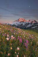 Mount Baker seen from wildflowers meadows on Skyline Divide, Mount Baker Wilderness North Cascades Washington
