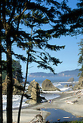 Beach, Trees, Pacific Ocean, Ocean, Olympic, Olympic National Park, Washington