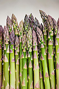 Bunches of freshly picked asparagus in the Vale of Evesham, Worcestershire, UK