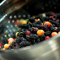 Summer berry harvest of Mulberry, Black raspberry, and cherry.
