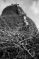 La fotografia ritrae i tralci di vite che costituiscono la materia prima della FÚcara di Novoli. La FÚcara, la cui costruzione inizia la mattina del 7 gennaio, Ë dedicata a Sant'Antonio Abate ed Ë costituita da un falÚ realizzato con fascine di tralci di vite (sarmente) recuperate dalla rimonta dei vigneti. Sulla cima della fÚcara, la mattina della Vigilia, viene issata un'artistica bandiera sulla quale Ë l'immagine del Santo. L'accensione della FÚcara avviene attraverso una batteria-fiaccolata. Una volta accesa, la FÚcara arde tutta la notte dando vita al fenomeno detto delle fasciddre, le faville che, nell'aria, somigliano ad una pioggia di fuoco. (fonte http://www.comune.novoli.le.it/focara/storia_focara.php).