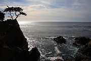 Lone Cypress Tree in Monterey