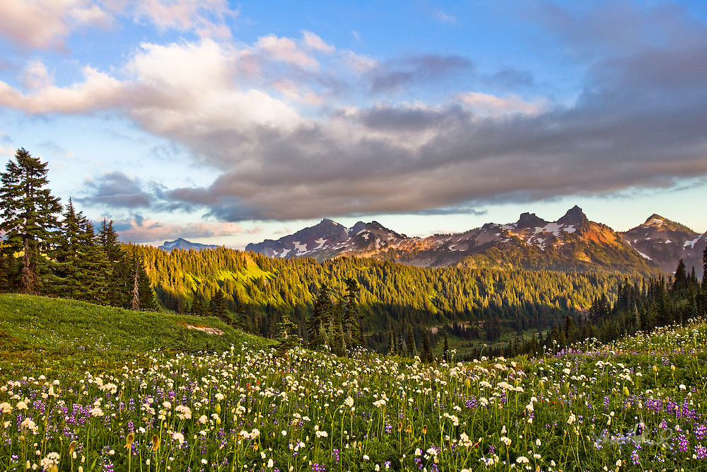 This is one of the most beautiful landscapes I've ever seen. Everywhere you look there were great shots especially  the Tatoosh Range in the south with the wildflowers. I definitely will be returning to Mt Rainier next year.