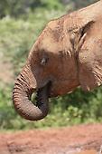 David Sheldrick Wildlife Trust-Kenya