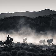 Running to Pasture