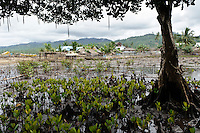Mangroves at Dudepo, Bolmong Selatan, Sulawesi, Indonesia.