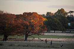© Licensed to London News Pictures. 27/10/2018. London, UK. First light catches the warm autumn colours of a tree in Richmond Park, west London as a cold front hits the capital. snow is expected on high ground in northern parts of the UK over the weekend. Photo credit: Ben Cawthra/LNP