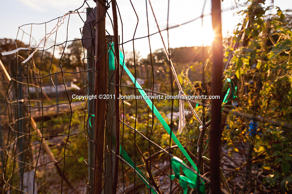 View through a wire fence in a community garden at sunrise. WATERMARKS WILL NOT APPEAR ON PRINTS OR LICENSED IMAGES.