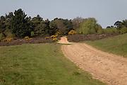 Suffolk Sandlings heathland