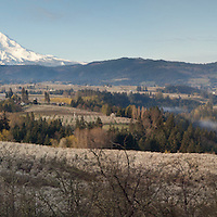 Panorama Point view of the Hood River Valley. Hood River, Oregon.