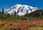 Explore fall foliage colors in Paradise Valley in Mount Rainier National Park, Washington, USA.