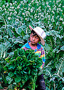 A boy with cabbages in Yunnan, China.