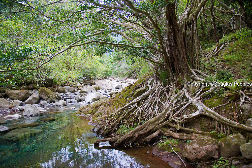 Waihee River, Maui, Hawaii