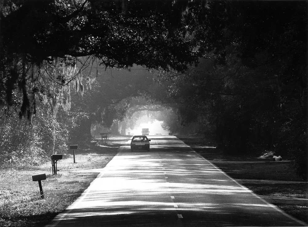 A tunnel of live oaks hangs over SC 46 leading from Bluffton, SC.