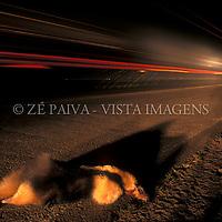 Animal atropelado, foto de Ze Paiva/Vista Imagens