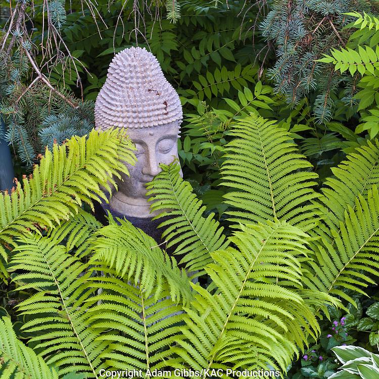 garden statue hiden behind ferns