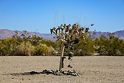 Shoe Tree in Slab City California