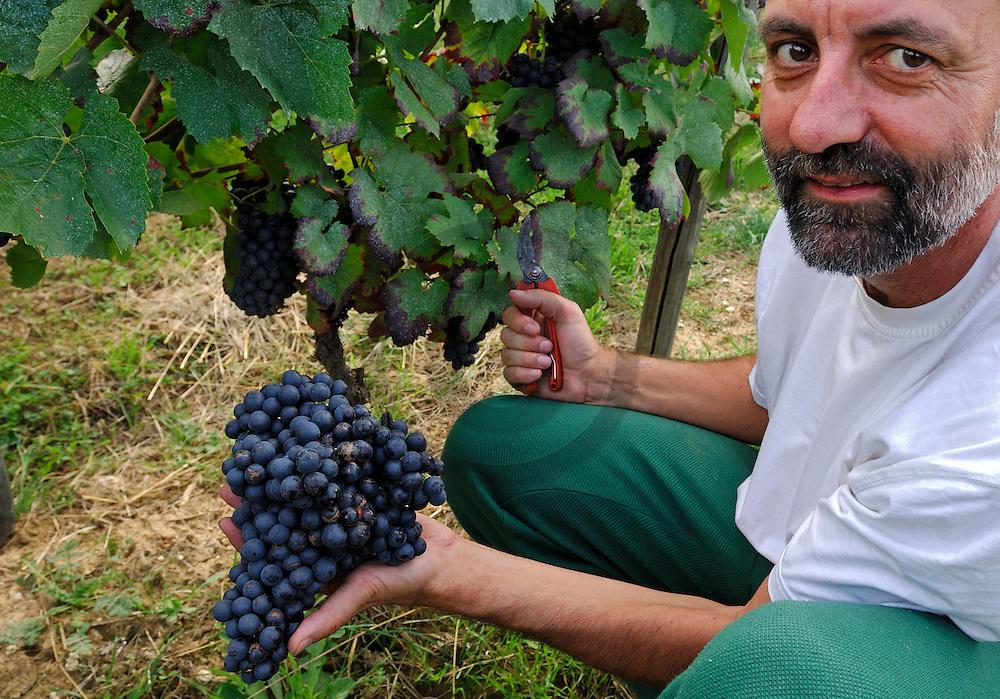 29/09/06 - LIMAGNE - PUY DE DOME - FRANCE - Vendanges manuelles, grappe de GAMAY. Cotes d'Auvergne, viticulteurs de la Cave Saint Verny - Photo Jerome CHABANNE