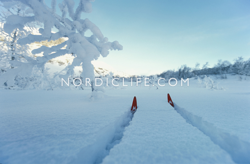 Crosscountry skies.<br /> Tyin/ Norway.
