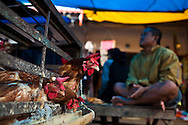 chickens for sale in market in Rantepao, Sulawesi, Indonesia