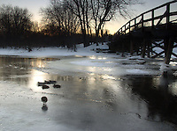 Waterfowl on a Frozen Creek at Minute Man National Historic Site, Concord, Massachusetts