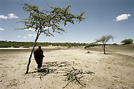 Tanzania, traditional Maasai life. Lepai watches as cattle move across a dried out lake.
