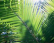 Palm<br />