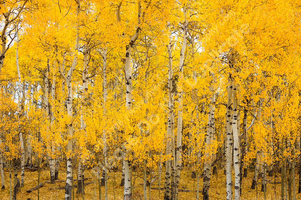&copy;2014, Sean Phillips<br /> http://www.RiverwoodPhotography.com