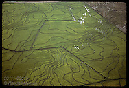 Aerial of flooded rice fields striped with dikes and glinting in sun; Granja Bretanhas, RS. Brazil