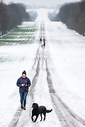 UNITED KINGDOM, Windsor: 01 February 2019. <br /> A walker and her dog brave the cold and the snow along The Long Walk in Windsor this morning. The snow has caused a number of schools to be closed across the country today because of the adverse weather. <br /> Rick Findler / Story Picture Agency