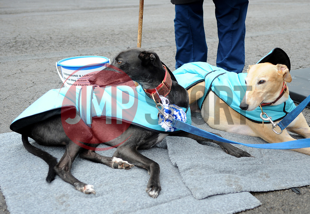 Bucket collection for Greyhound and Lurcher Rescue - Mandatory by-line: Neil Brookman/JMP - 18/11/2017 - FOOTBALL - Memorial Stadium - Bristol, England - Bristol Rovers v AFC Wimbledon - Sky Bet League One