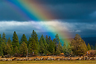 Rainbow over the Hat Creek Valley, Shasta County, California